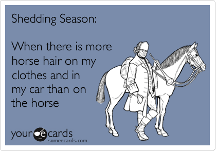 Funny Seasonal Ecard: Shedding Season: When there is more horse hair on my clothes and in my car than on the horse.