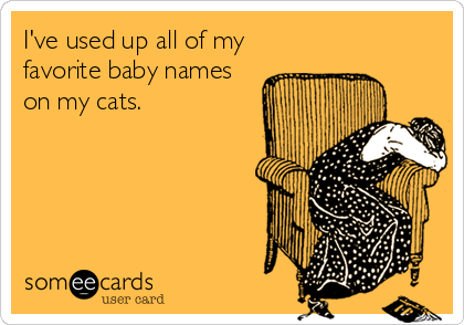 someecards.com - I've used up all of my favorite baby names on my cats.