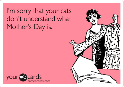someecards.com - I'm sorry that your cats don't understand what Mother's Day is.